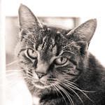 Spiegel Katze Cleo