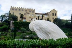 Ein weißer Pfau vor dem Schloss Trauttmansdorff